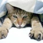 わたしがふとんの中に潜って寝る理由