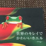 カエルキャラが大好き!アメトーークのスタジオはカエルでいっぱい!