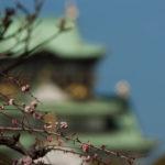 大阪城公園の梅林は午前中に行くのがおすすめ!
