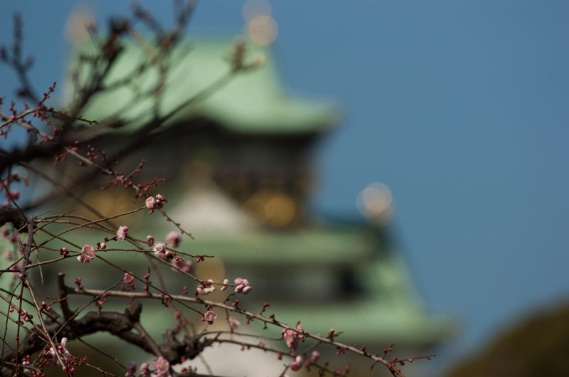 大阪城公園 梅園