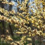 3月の大阪市立長居植物園は春の花がたくさん!写真を撮りにいこう!!
