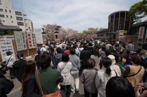 大阪造幣局桜の通り抜け