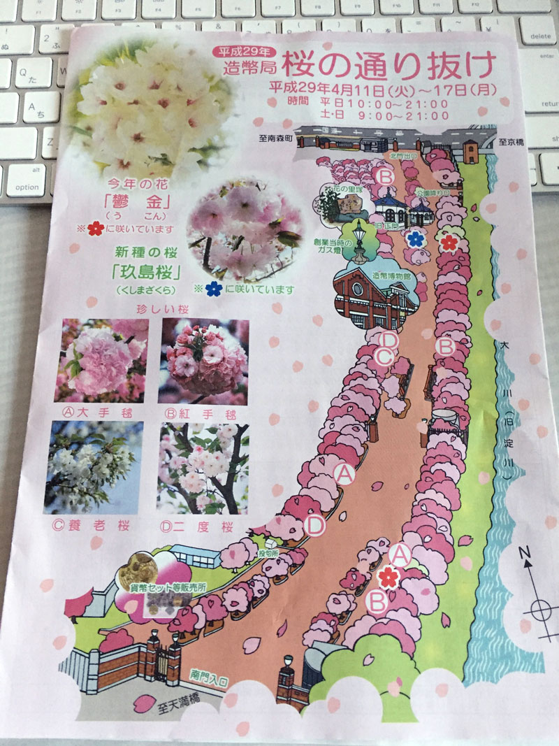 造幣局の桜の通り抜け 2017