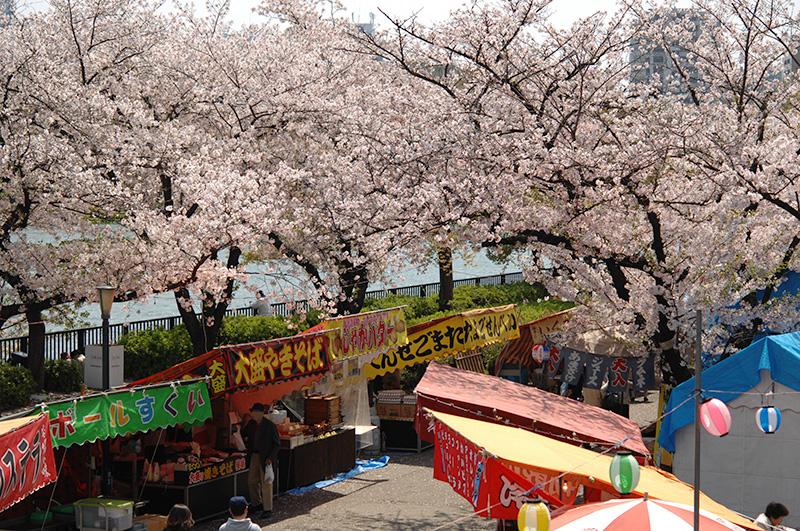 造幣局の桜の通り抜け 2017 公園の桜 出店