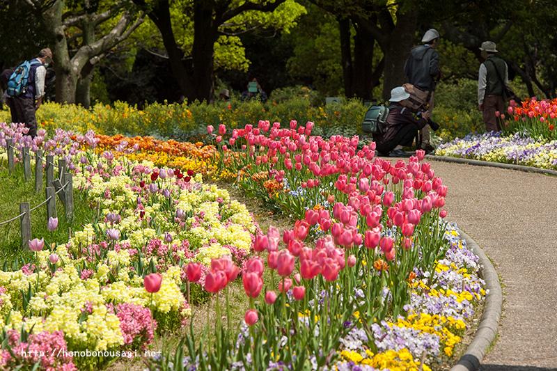 長居植物園 花壇 チューリップ