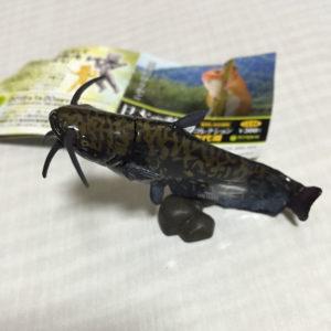 日本の動物コレクション 琵琶湖・母なる古代湖