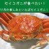 セイコガニが食べたい!11月の楽しみといえばセイコガニ!!