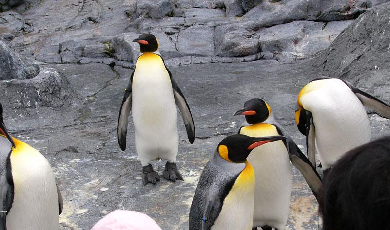 旭川市あさひやまどうぶつえん ペンギン館