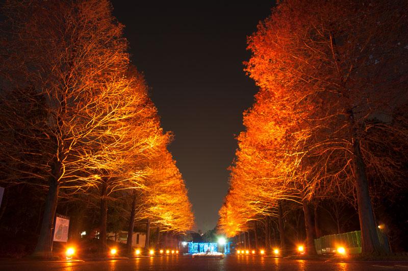 長居植物園 イルミネーション 大阪
