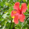 沖縄旅行記②那覇市~沖縄市までのカントリーサインと東南植物楽園を散策