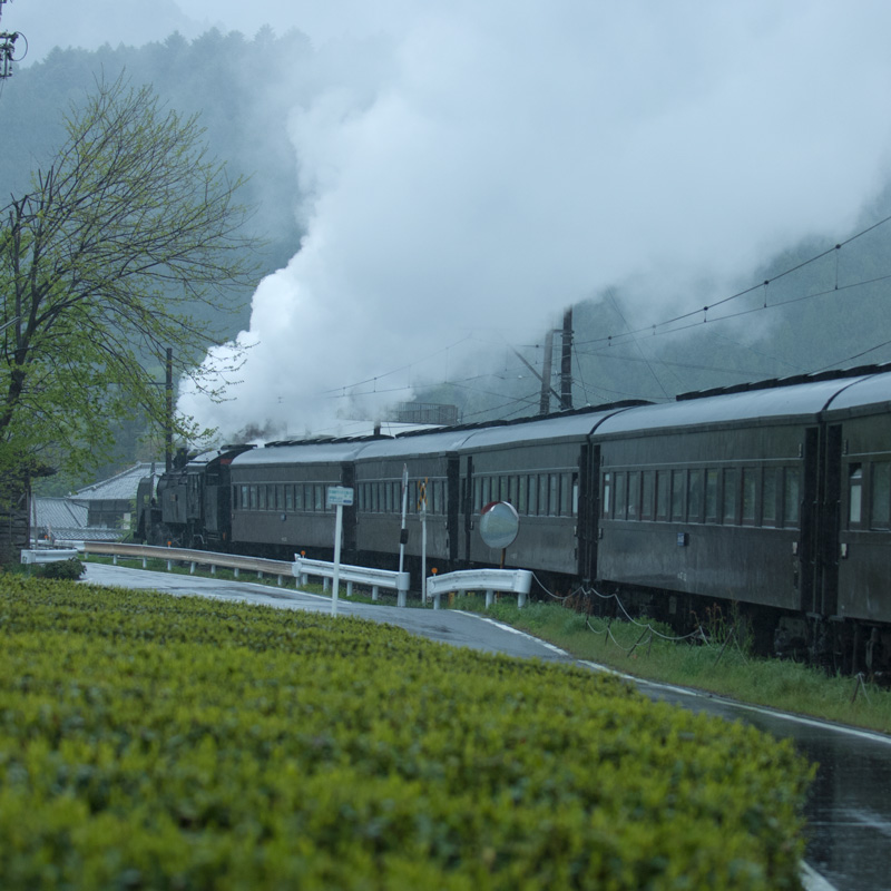 大井川鐵道 茶畑とSL