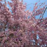 静岡一周富士伊豆箱根めぐり旅⑪富士山五合目から山中湖へドライブ旅