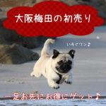 大阪梅田の初売り&2018冬のクリアランス&プレセールをチェック!!一足お先にお得にゲット♪