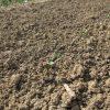 畑の様子を見に行く&根モノの播種