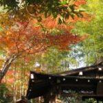 嵐山に紅葉を見に行ってきました