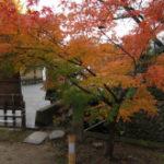紅葉を見に行こうよぅ!3日目:大覚寺@嵐山