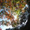 紅葉を見に行こうよぅ!2日目:南禅寺周辺散策@京都
